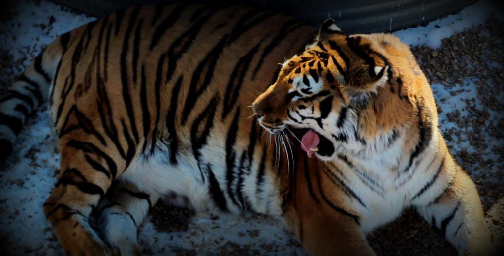 Roar by mrthemanphoto