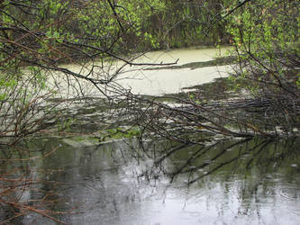 raindrops on pond