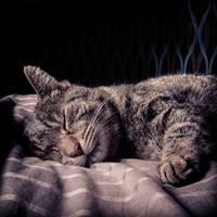 Sleeping Angel by TaNa-Jo