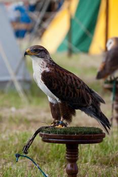 Eagle stock