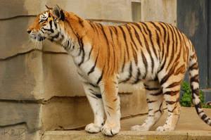 Tiger Stock II by KillerRu