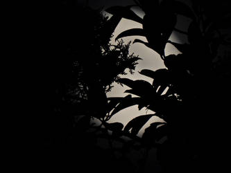 A play of leaves and shadows in the Moonlight...