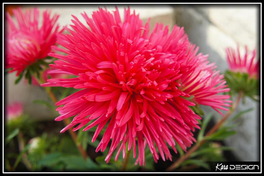 Tuesday Garden Flower by haz999
