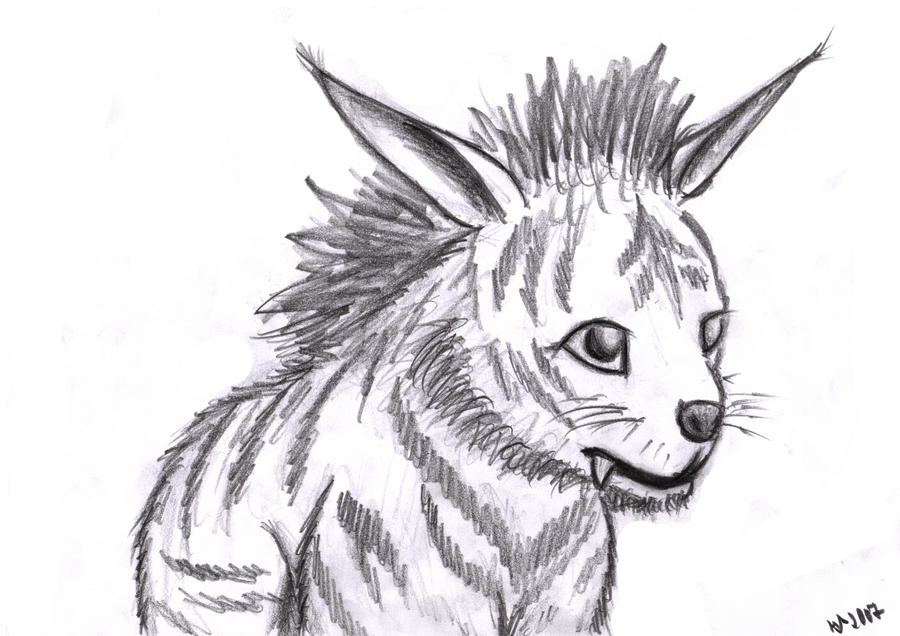 Baby cougar by spagi on DeviantArt