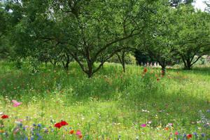 flower meadow by EnniArt