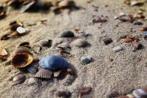 Blue shell by EnniArt