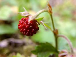Strawberry by EnniArt
