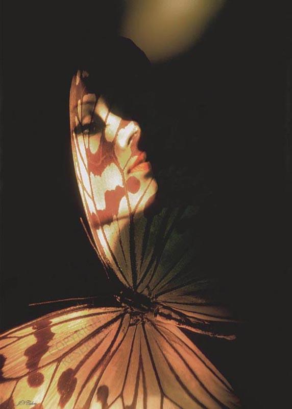 Madam Butterfly by John-Neville-Cohen