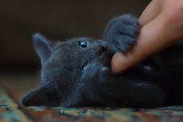 cat by kirichentsov