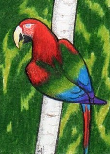 Red and Green Macaw by Madmystyk