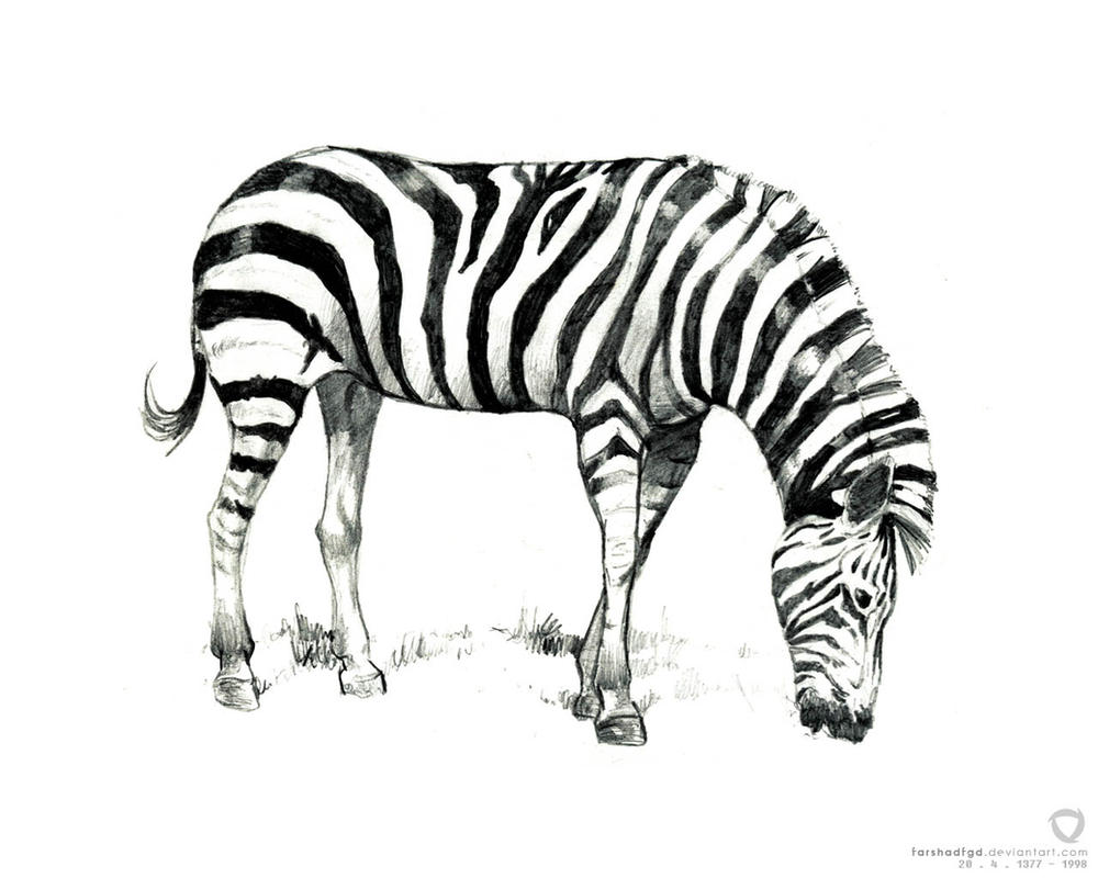 zebra drawing - photo #31