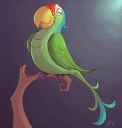 Perico  Parrot