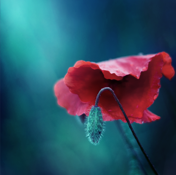 simply red by Invisiblesk