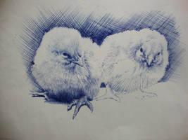 Birds by Sotarter