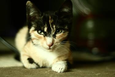 Kitty by sadik18