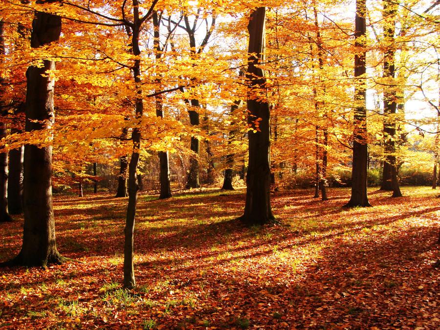 Golden Polish Autumn by Luin-Tinuviel