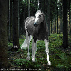 Dark by ArrowCeeDesign