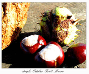October Fruit Macro by dadirty