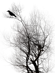 raven by peroni68