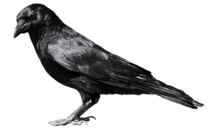 crow 6 by peroni68