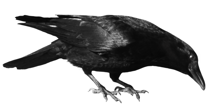 crow 8 by peroni68