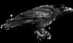 crow 21-2