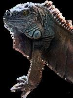 Iguana by peroni68