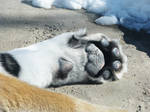 Paw Stock 1: Amur Tiger