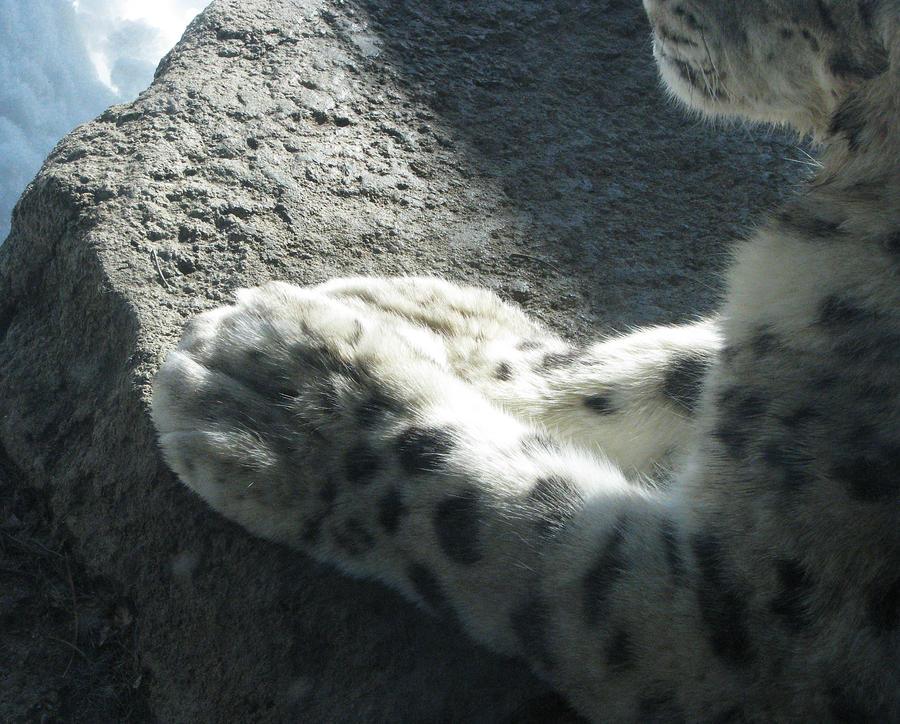 Paw Stock 6: Snow Leopard by HOTNStock on DeviantArt