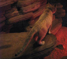 Sand Cat Stock 3 by HOTNStock