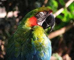 Bird Stock 3: Macaw by HOTNStock
