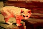 Sand Cat Stock 8