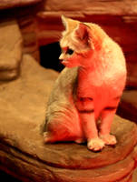 Sand Cat Stock 10 by HOTNStock