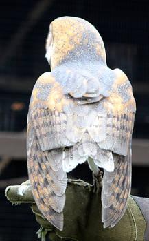 Owl Stock 19: Barn Owl