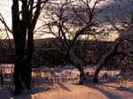 Winter Forest Stock 2