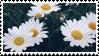 Daisies Stamp (f2u)