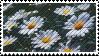 Daisies Stamp (f2u) by tanakass