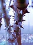 thorns by clandestine-stock