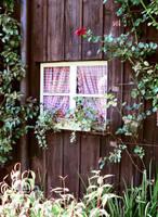 cottage window by clandestine-stock