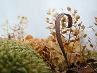 dried flowers1 by clandestine-stock