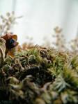 dried flowers II by clandestine-stock