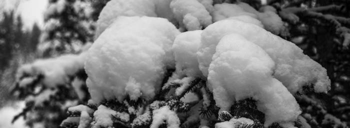 Frosty Floof