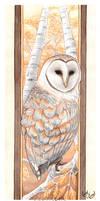 Barn Owl by LiquidFaeStudios
