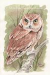 Eastern Screech Owl by LiquidFaeStudios