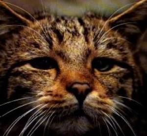 Hatre-Keddah's Profile Picture