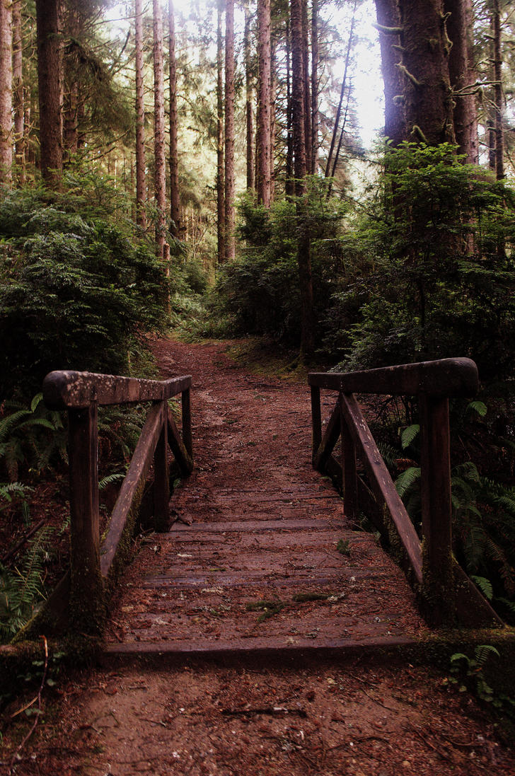 Bridge to the Ferns by Know-The-Ropes