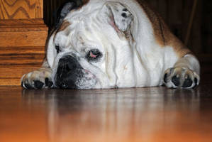 Princess Pondering by charliemarlowe
