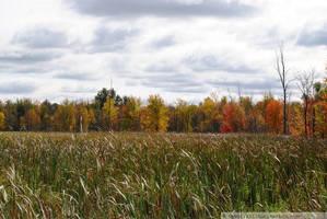Autumn in Wisconsin: Marsh by charliemarlowe