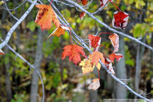 Autumn in Wisconsin: Changing by charliemarlowe