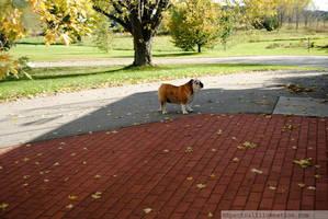Princess Enjoying Autumn II by charliemarlowe